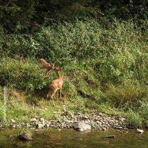 Animation Nature sur les empreintes des mammifèrespar Benj'Anim à Charleville-Mézières dans les Ardennes 08000