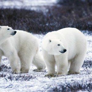 Animation Nature la télé, la voiture, les usines et les ours polairespar Benj'Anim à Charleville-Mézières dans les Ardennes 08000