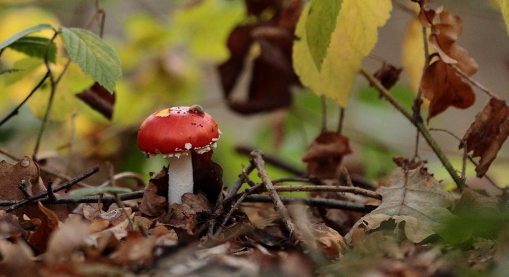Découverte des champignons
